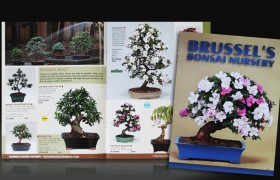 Brussels Bonsai Catalog